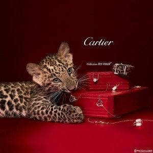 Cartier Logo - 5 big fashion brand logos and the 21 design & marketing tips you can ...
