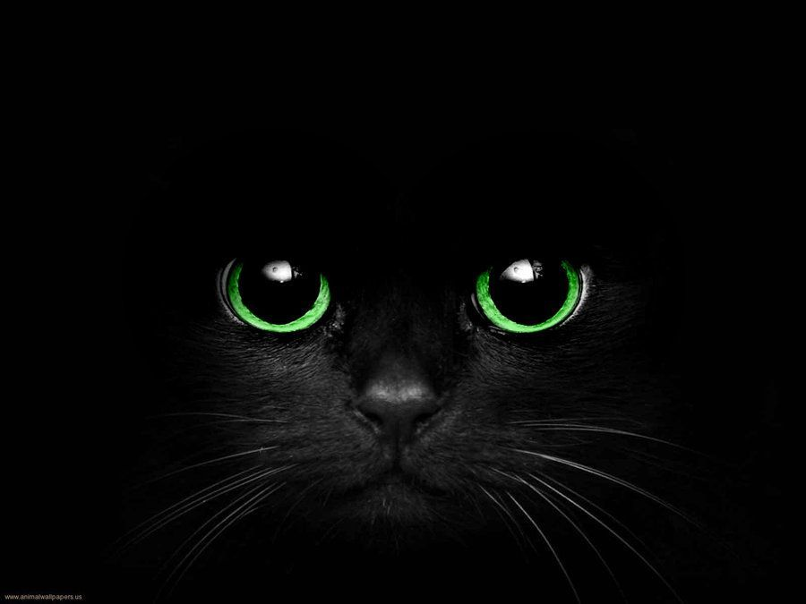 Black and Green Eye Logo - BLack Cat with Green Eyes by Cometsong | Cats and Kittens | Cats ...