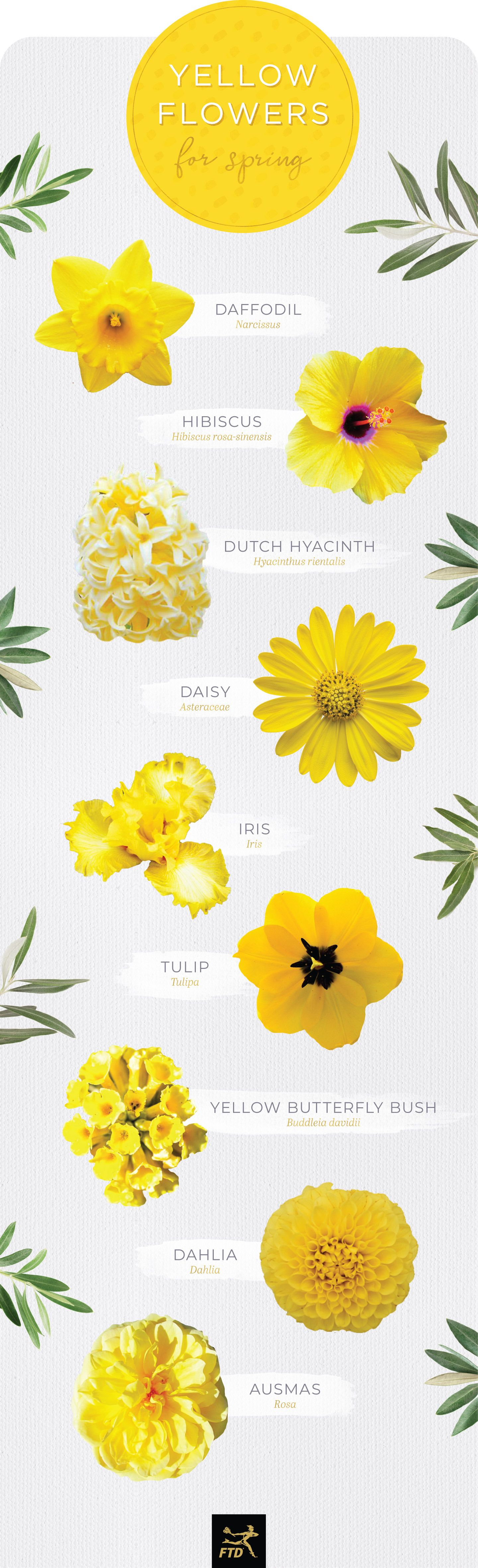 Yellow Flower Shaped Logo - 30 Types of Yellow Flowers - FTD.com