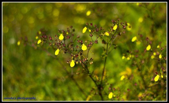 Yellow Flower Shaped Logo - Unknown ballon shaped Yellow Flower - Picture of Chattakpur ...